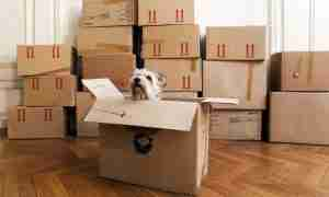 doginbox 5680847f3df78ccc15a49dde 300x180 - Moving with pets? Make it a smooth transition.